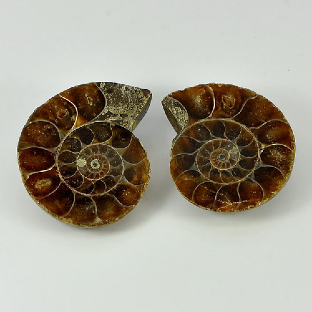 63.82 Ct. 2 Pcs. Natural Yellow Brown Ammonite Fossil From Madagascar Unheated