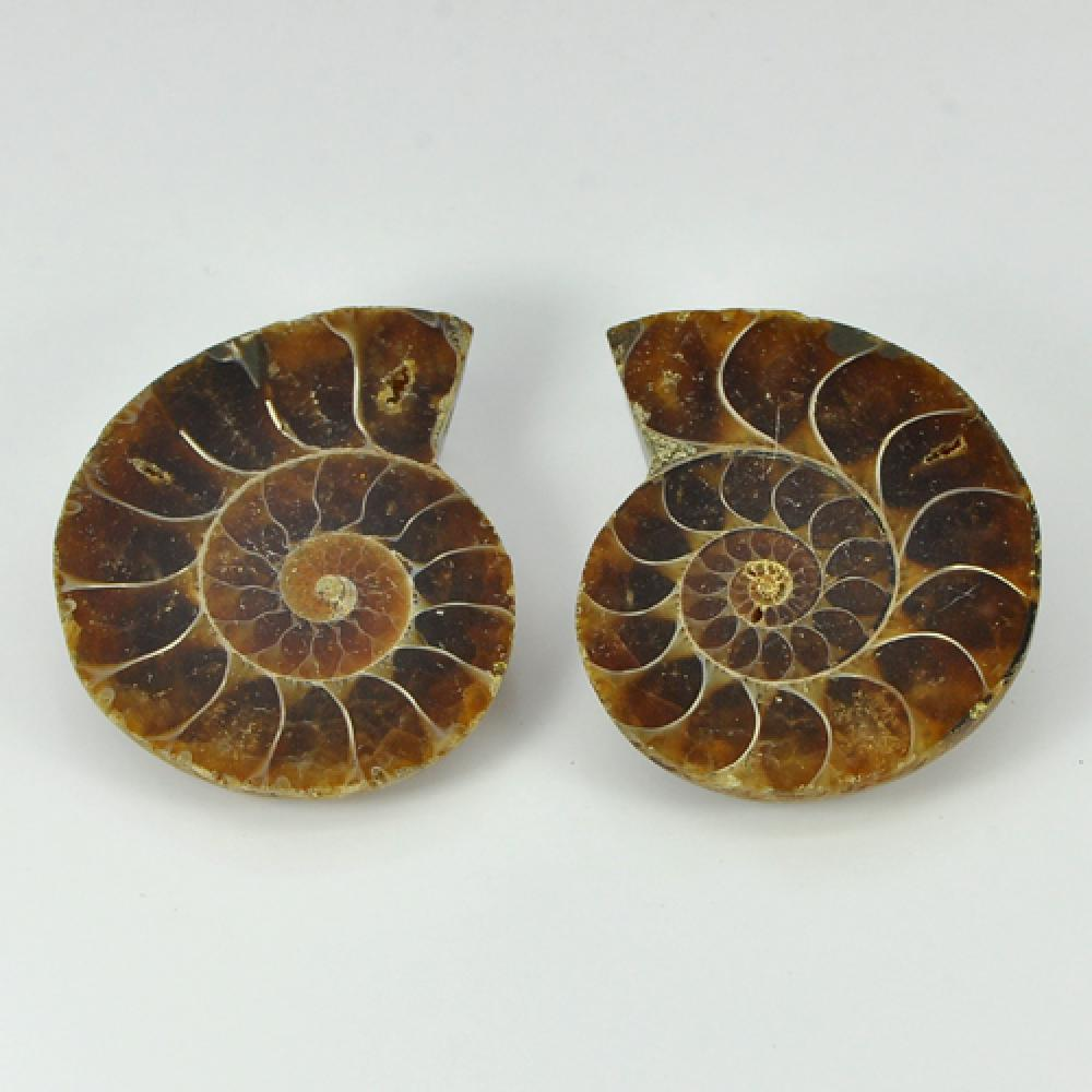 104.00 Ct. Matching Natural Yellow Brown Ammonite Fossil Madagascar Unheated