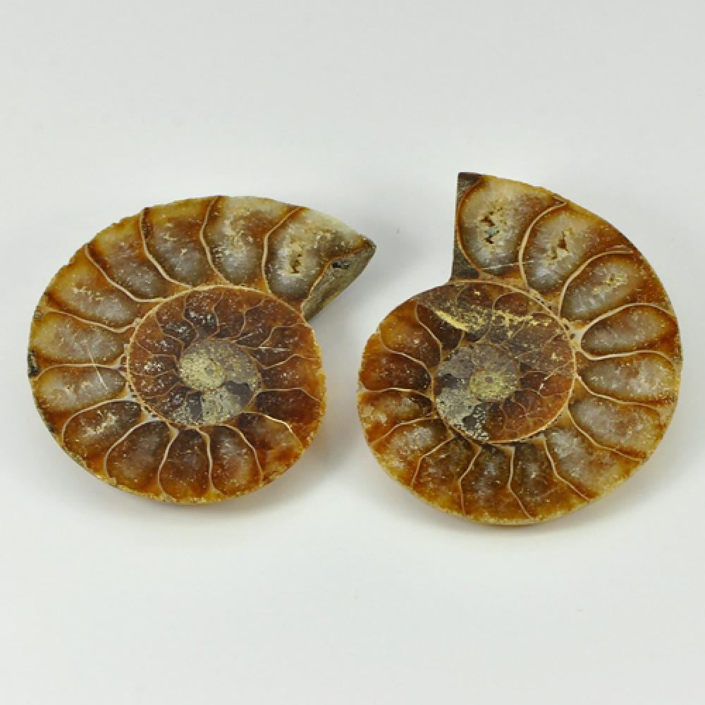 80.66 Ct. Natural Yellow Brown Ammonite Fossil Madagascar Unheated