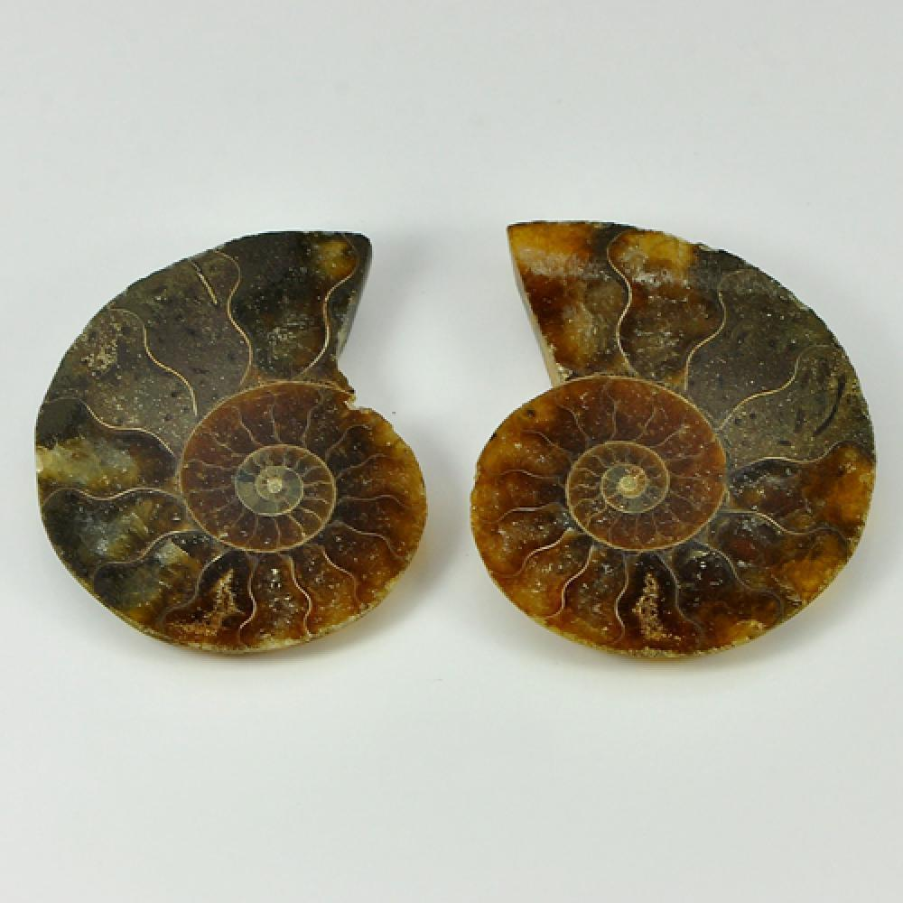 67.06 Ct. 2 Pcs. Natural Yellow Brown Ammonite Fossil Madagascar Unheated