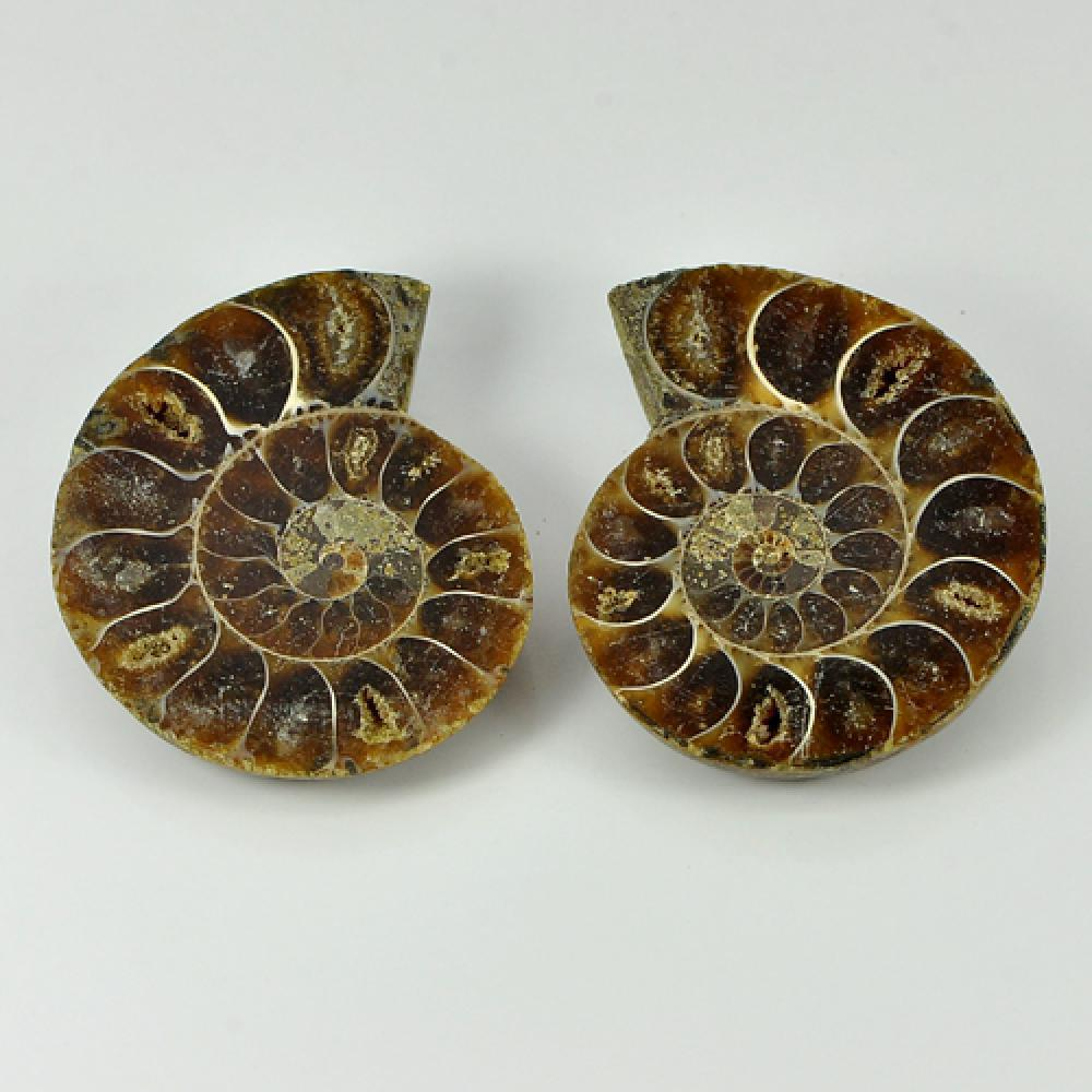 115.55 Ct. Matching Natural Yellow Brown Ammonite Fossil Madagascar Unheated