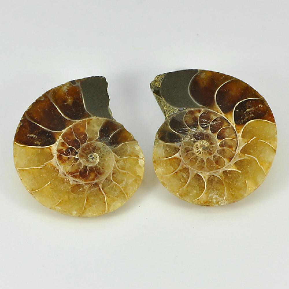 68.98 Ct. Pair Natural Yellow Brown Ammonite Fossil From Madagascar