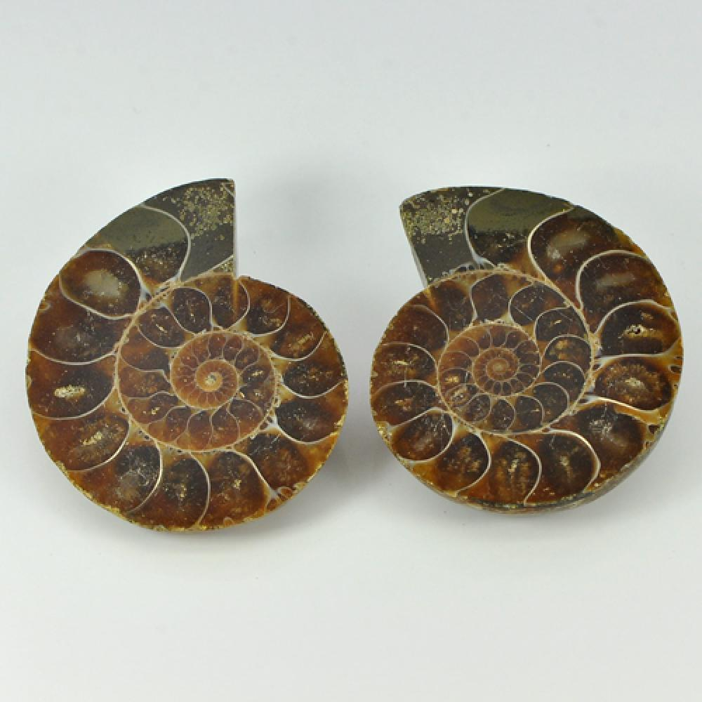 Matching 161.28 Ct. Natural Yellow Brown Ammonite Fossil From Madagascar